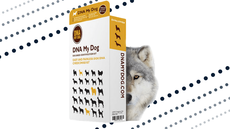 Learn more about your dog's genetic background.