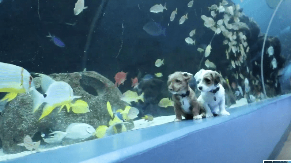 Take a break from stressing and watch these puppies explore an aquarium