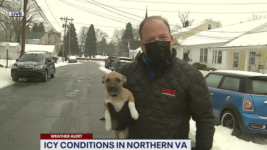 Pierogi the puppy crashes live weather report and awwwwww