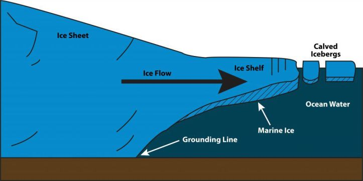 Marine ice freezes and forms under ice shelves.
