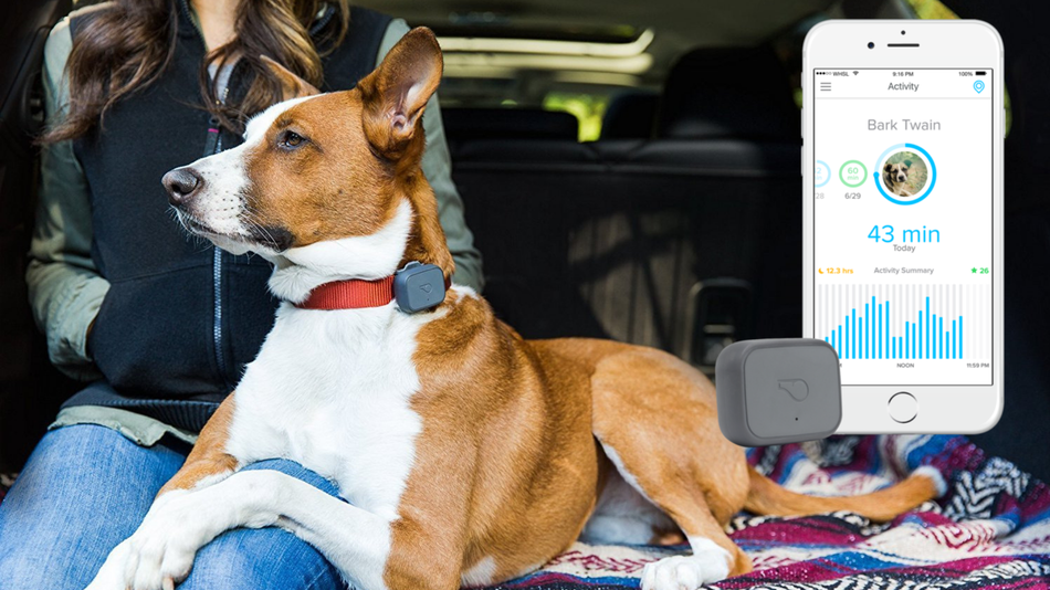 the whistle 3 gps pet tracker is 20