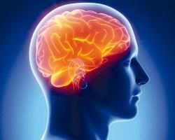 Что любит и не любит наш мозг