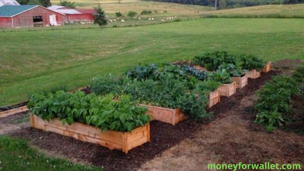 Cedar Planter Boxes moneyforwallet