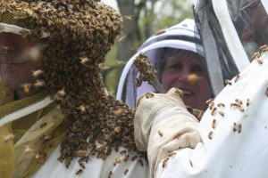 Looking for queen of the honey bees