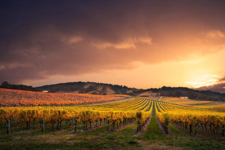 Newport Beach Vineyards and Winery
