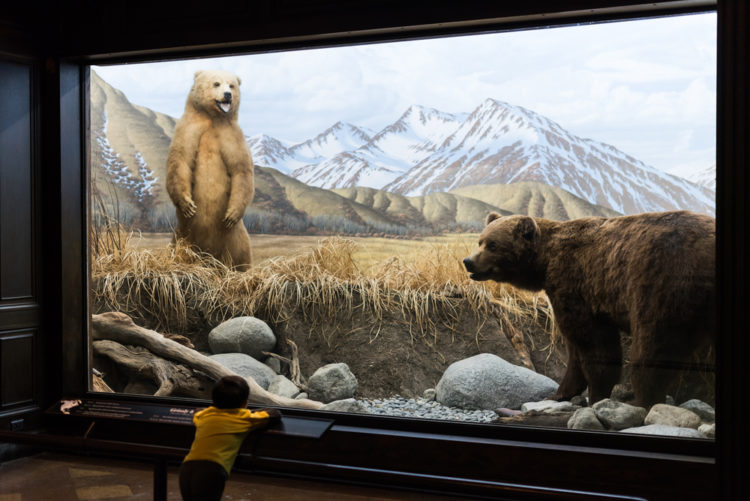 Visit the Brazos Valley Natural History Museum