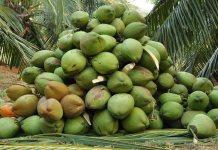Coconut-farmers