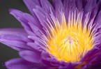 Exploring the Beauty of Floral Photography #1