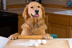 save money on dog food make your own