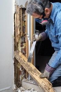termites home maintenance save money