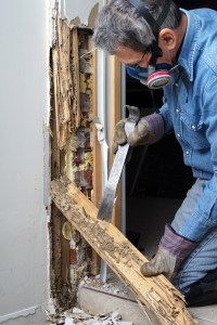 termites home maintenance save money