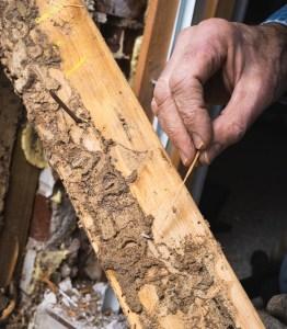 termites save money home maintenance