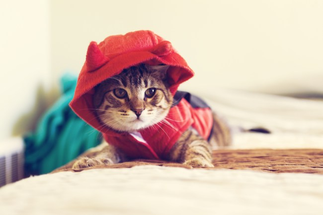 choosing pet Halloween costumes for cats