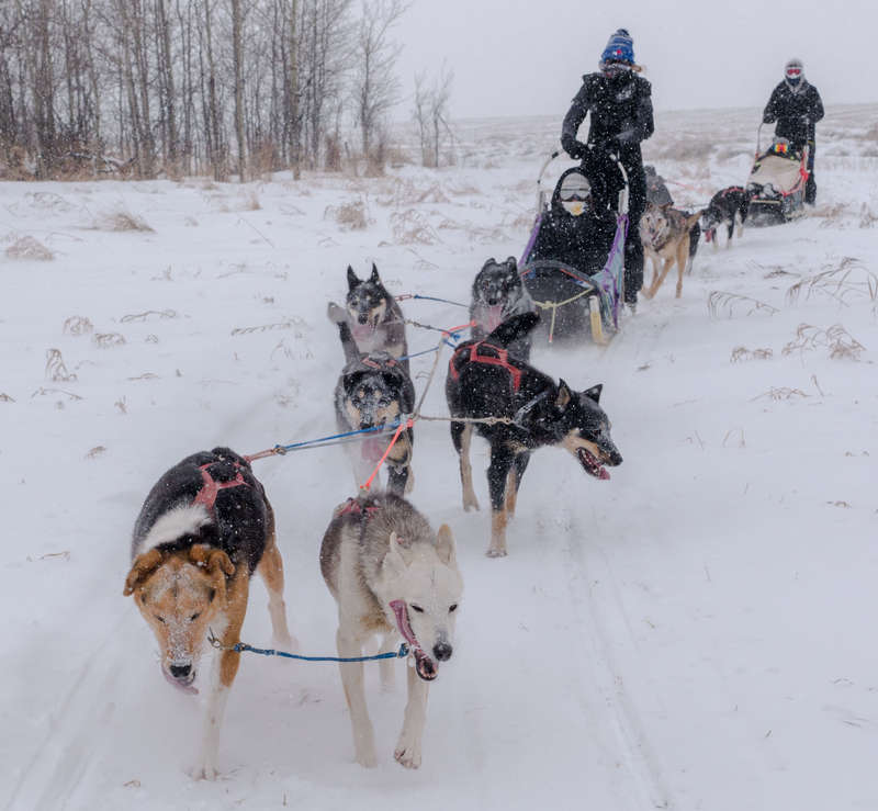 WorkAway Dog Sledding