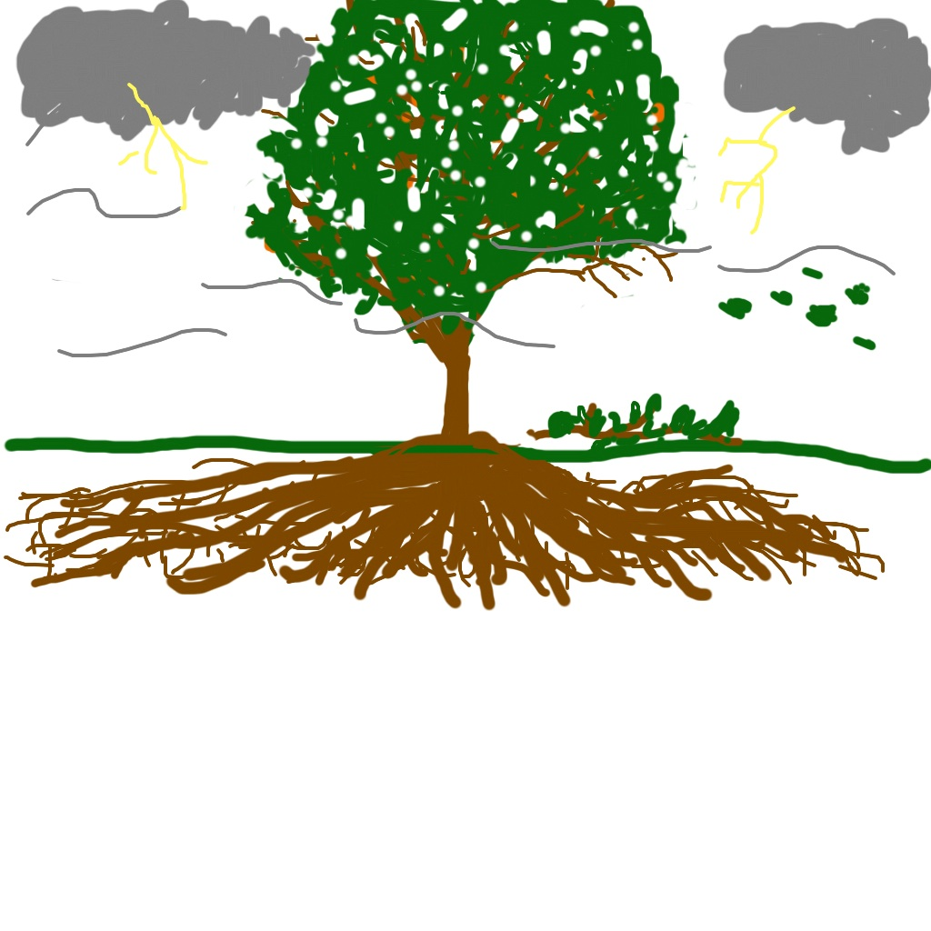 Pay for the tree or the seed? Why I invest in a ROTH IRA