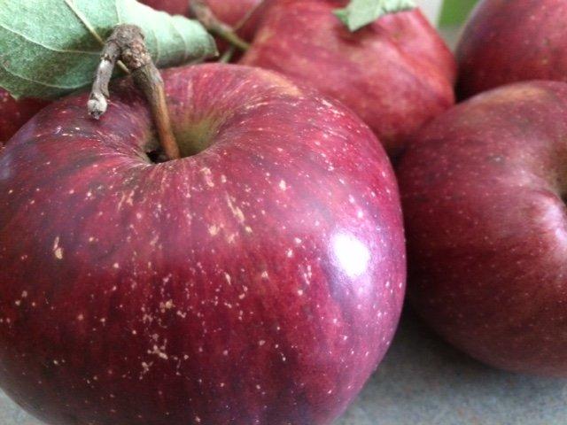 15 Frugal Fall Family Acitivities // Money Savvy Living #fall #autumn #family #familyfun #fallactivities #apple #applepicking