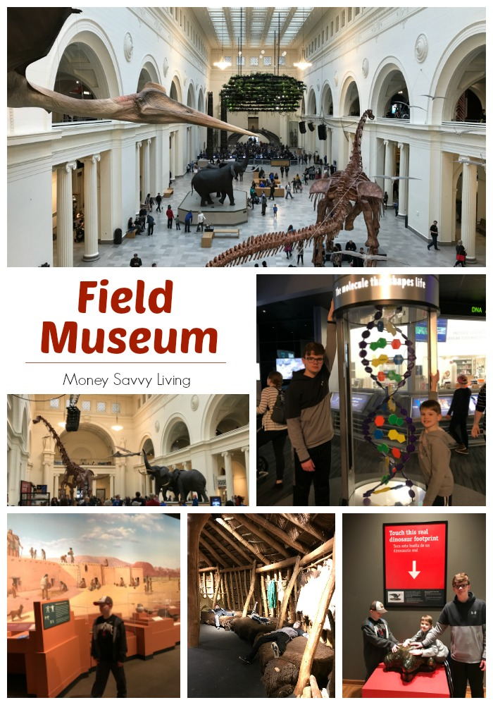 Museums in Chicago #fieldmuseum #choosechicago #chicago #museum
