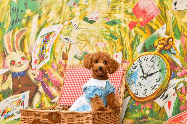 SBIいきいき少短 日本最大級のペットイベント「インターペット」に初出展!ファンタジーな写真が撮れるフォトブースを設置!