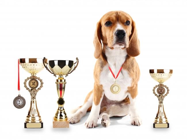 東京オリンピック開催まで約9か月!もしも、ペット版オリンピックがあったら…?自分のペットを参加させたい競技は「リレー」がNo.1!〜ペットとオリンピックに関する調査〜
