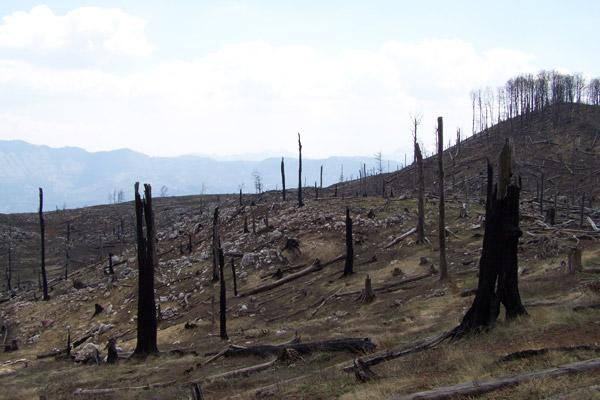 Destroyed lynx habitat in Munella mountain, Albania ©Aleksander Trajce PPNEA