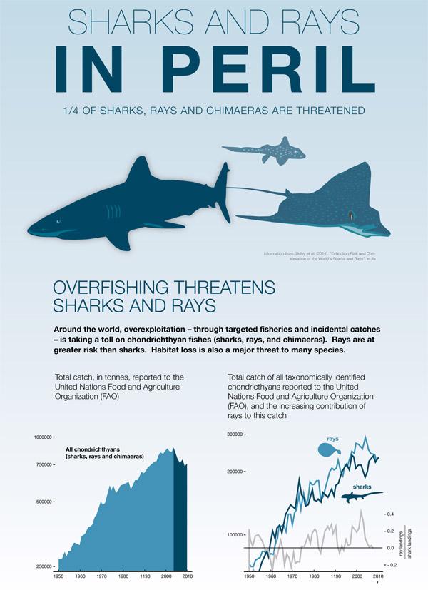 Gráfico de las especies de tiburones y rayas en peligro de extinción publicado para coincidir con el informe.