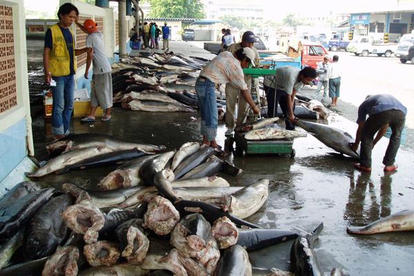 Cuerpos de tiburón siendo pesados y cortados en Muara Baru, Yakarta. Crédito de la fotografía – Australian National Fish Collection, CSIRO.