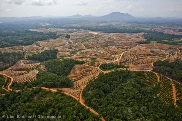 Palm Oil Documentation in Central Kalimantan