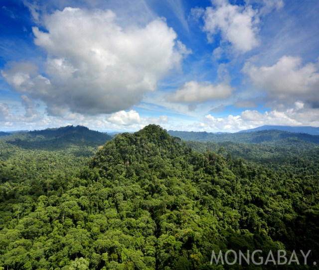 Background Information On Rainforests