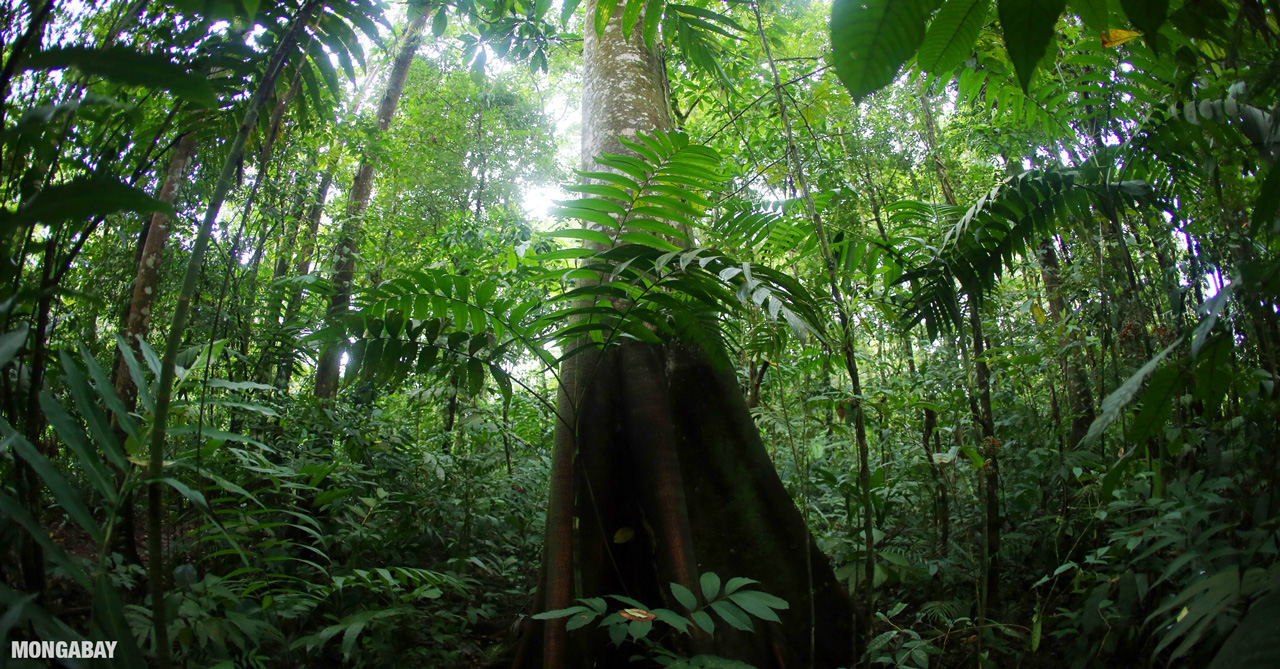 It is a long established fact that a reader will be distracted by the readable content of a page when looking at its layout. Rainforests In Mesoamerica