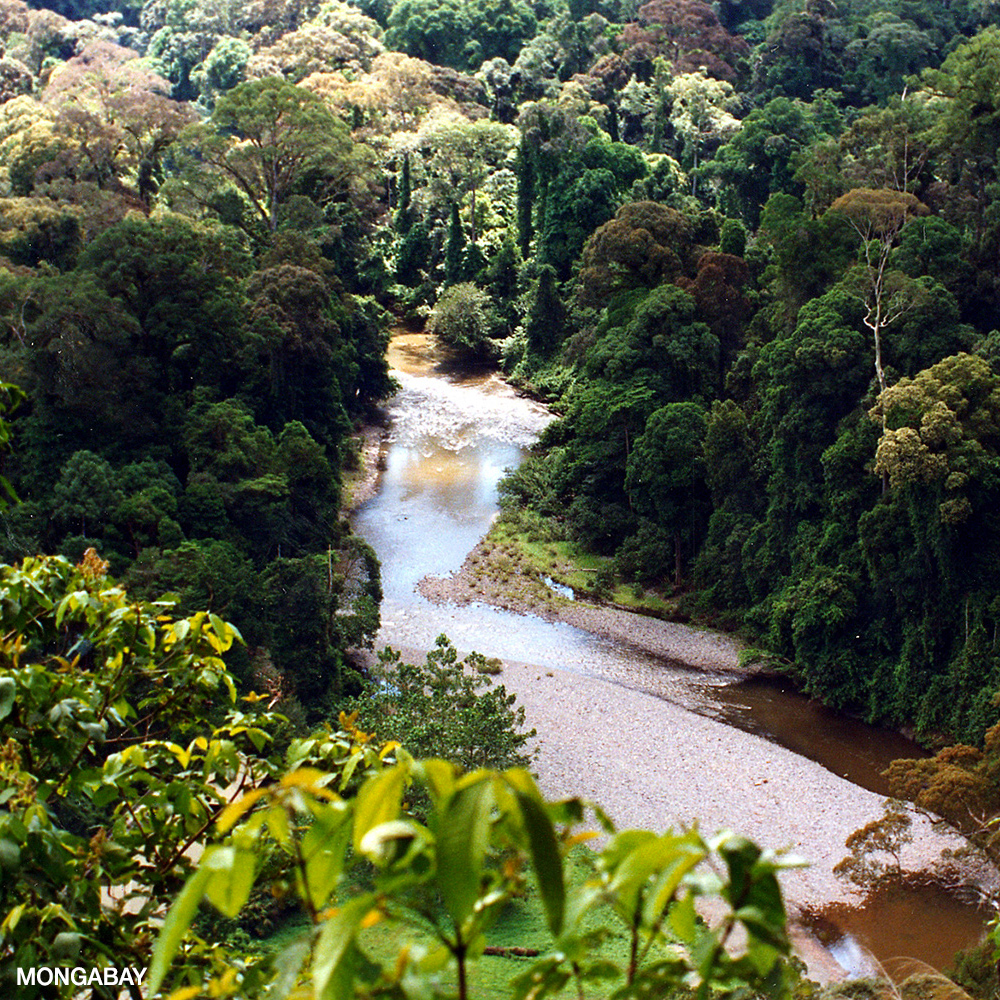 Many rainforests in central and south america have been burnt down to make way for cattle farming, which supplies beef to the rest of the world. What Are Tropical Rainforests