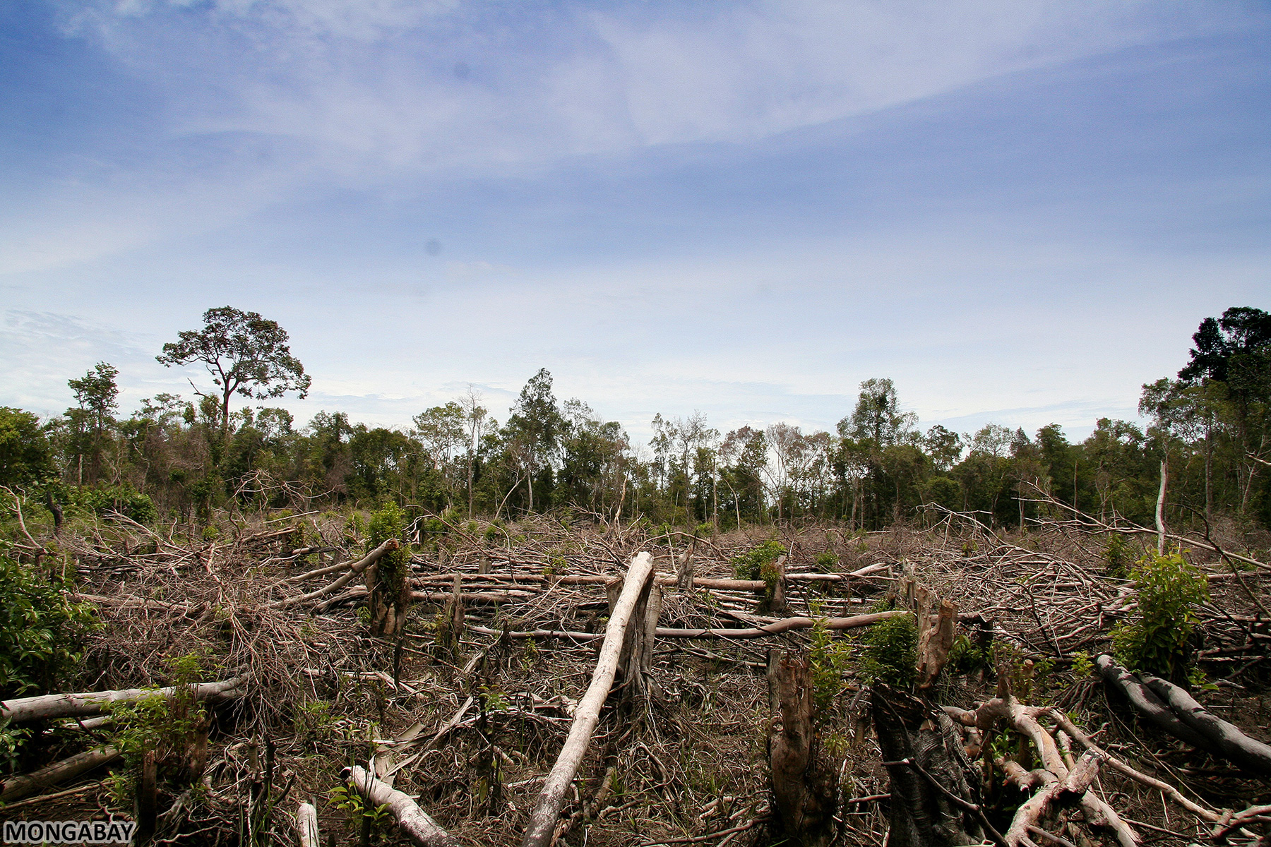 Deforestation, the permanent destruction of forests in order to. The Impact Of Deforestation