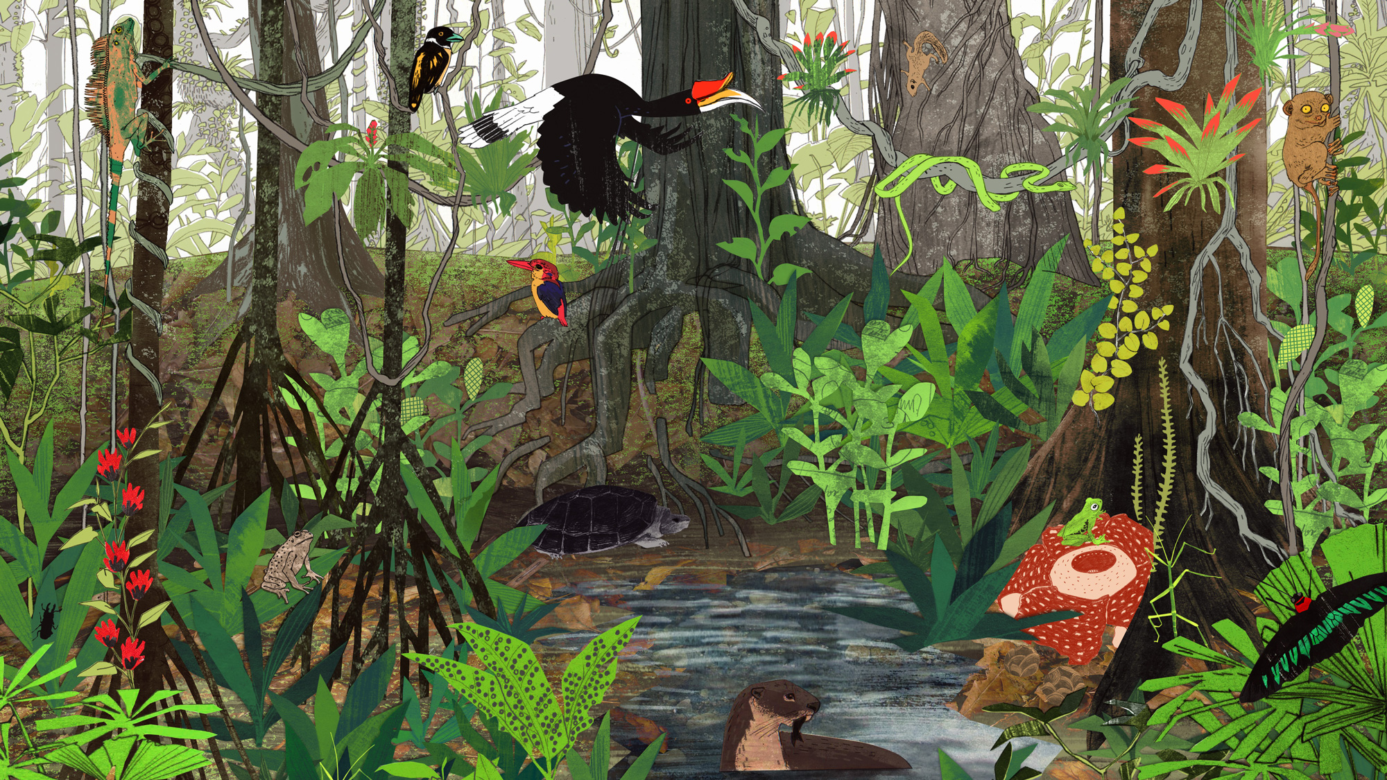 Rainforest Information For Kids