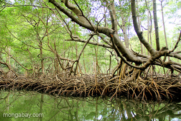 Mangroves in Los Haitises National Park in the Dominican Republic. Photo by: Tiffany Roufs.