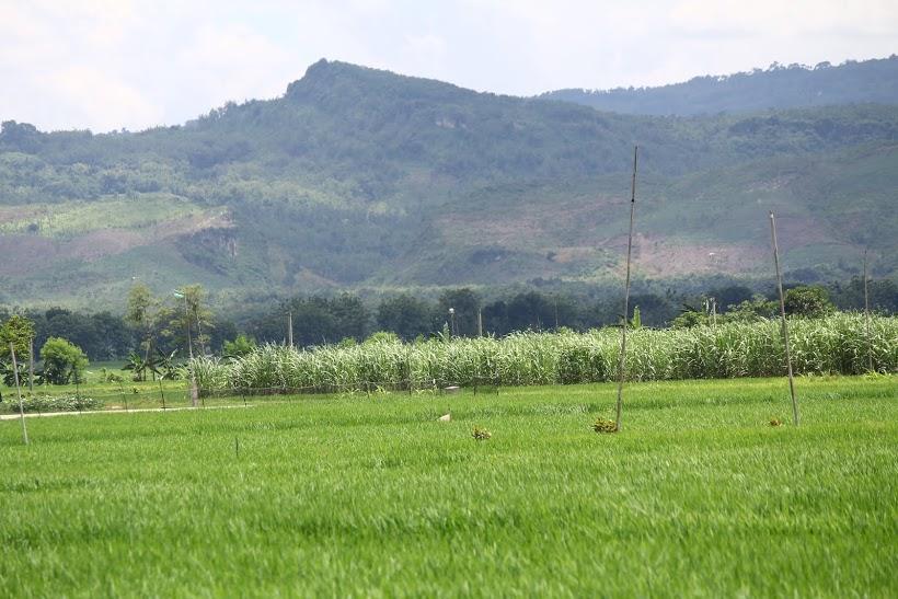Pegunungan karst Kendeng sebagai sumber air bagi pengairan irigasi sawah warga di Kayen, Tambakromo dan Sukolilo, Pati. Foto : Tommy Apriando