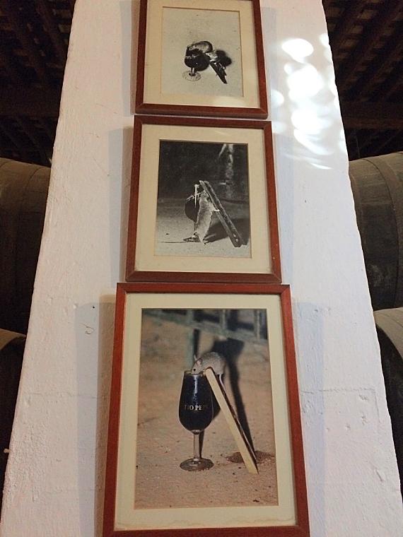 ヘレスのシェリー酒のボデガのネズミの写真