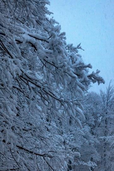 Inverno a Osho Gautama