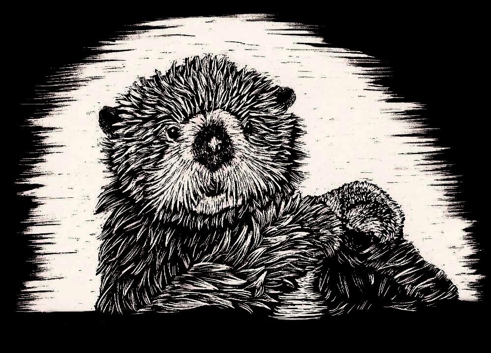 scratchboard otter