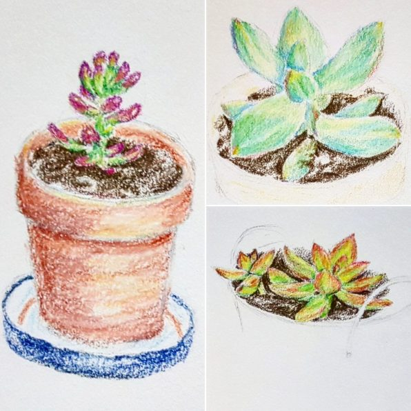 obsessed with succulents colored pencil art sketch