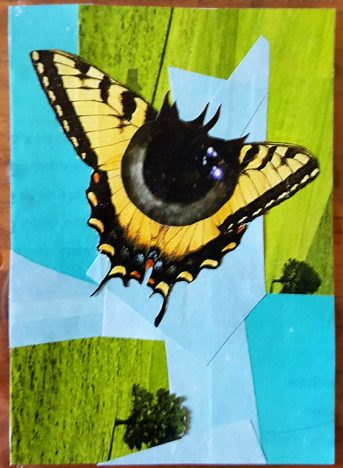 pupil butterfly make artist trading cards