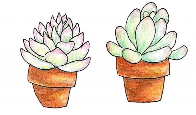 Succs in pots - Colored pencil drawings of two succulents in orange-tinted terra cotta pots. Both plants have a pale blue-green tint with pastel pink or purple on the tips of their leaves.