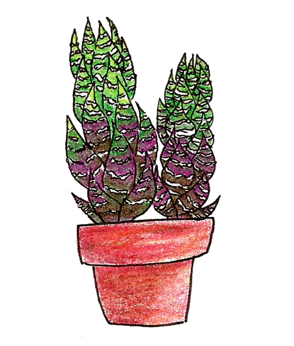 Succs in pots cool haworthia drawn in colored pencil with light green at the top and a violet-red gradient near the bottom of the plant. It's in a red-tinted terra cotta pot.