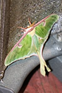 moths are beneficial inscts