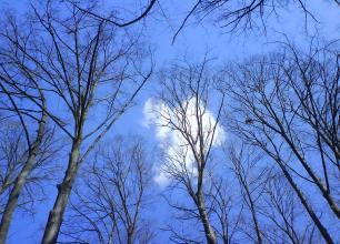 Immagine: Mia! Cielo sopra Villa Torlonia