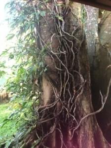 Tree-resilence