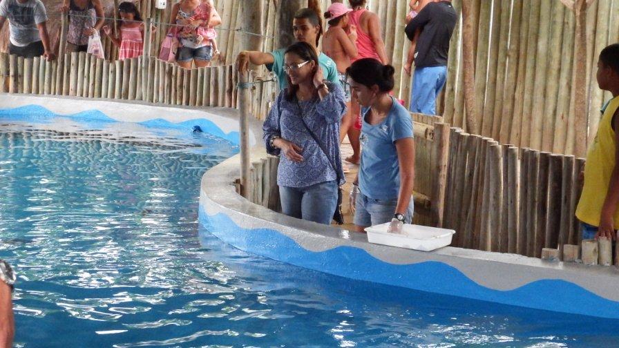 Alimentando os Tubarões
