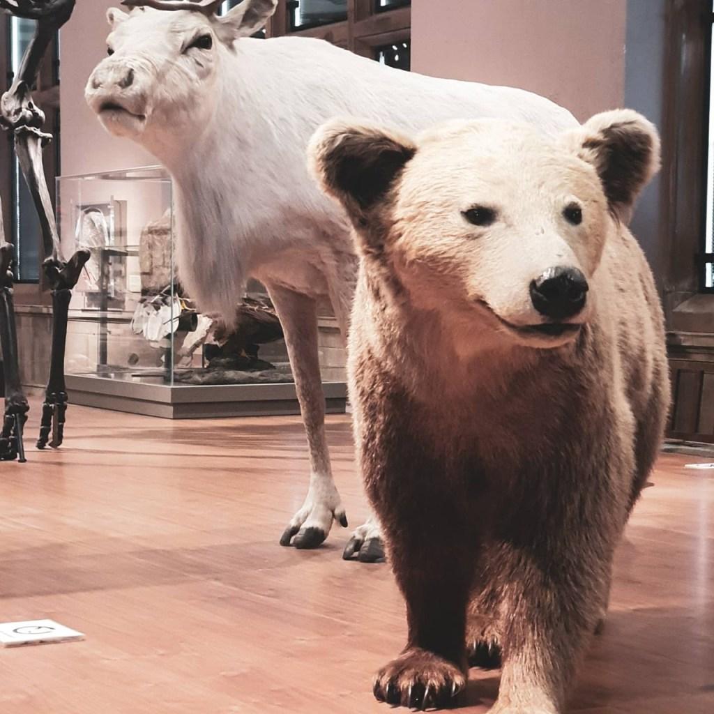 Natural History Exhibit in Kelvingrove Art Gallery and Museum