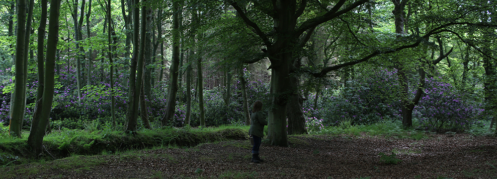 Phytosemiosis. Talking to the trees.