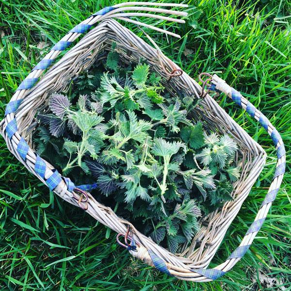 Basket of nettle
