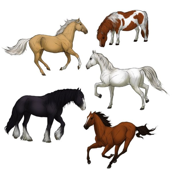 realistic horse breeds # 34