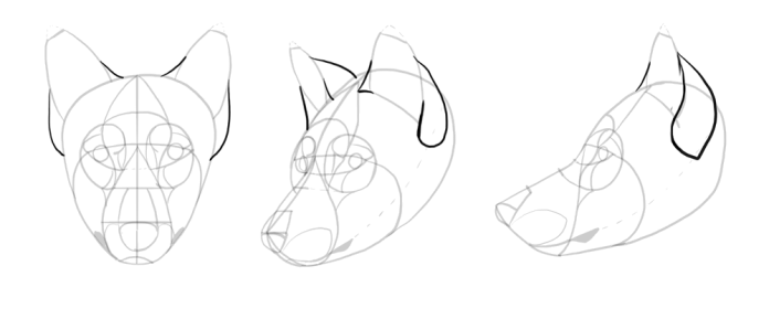 how-to-draw-wolves-drawing-head-14